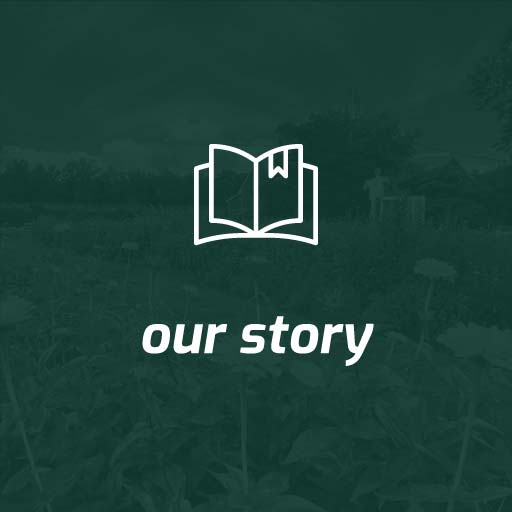 home, our story button green with white text